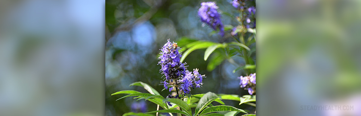 Vitex and Endometriosis | Alternative medicine & healing