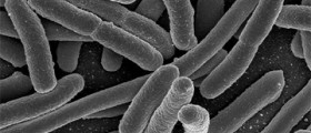 The Truth About the European E. coli Outbreak