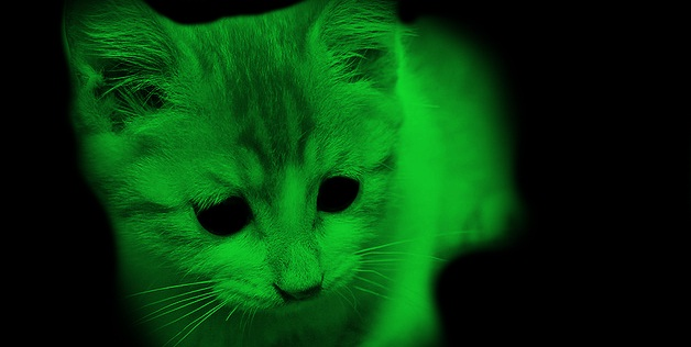 Green Glowing Cats Might Help In Hiv Research | Drugs ...