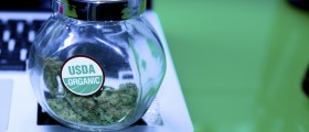 Benefits And Dangers Of Medical Marijuana: Should We Legalize It?