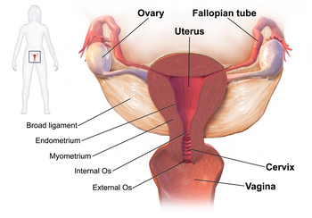 how to detect fallopian tube blockage