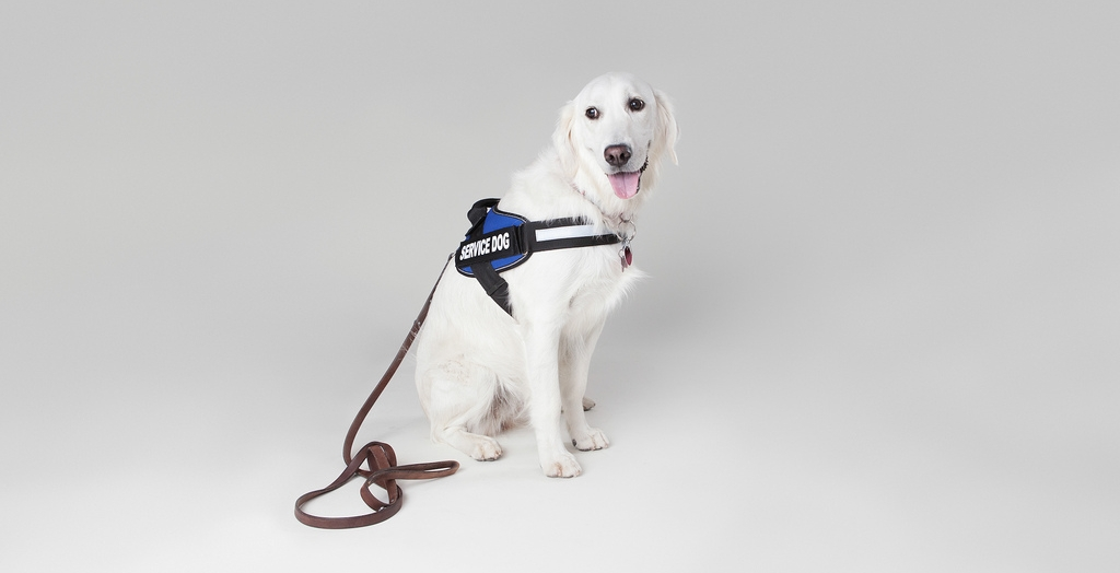 New Should You Consider Getting A (Psychiatric) Service Dog? | Healthy  BY11