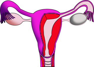Enlarged uterus symptoms | Women's Health articles | Family Health