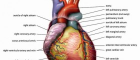 Warning Signs: How To Recognize Heart Attack