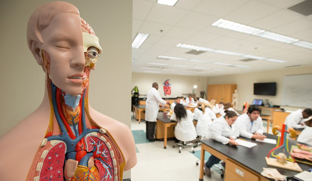 Replacing Cadavers In Medical School Best Mobile Apps For Learning