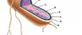 Escherichia coli infection: Symptoms & Treatment