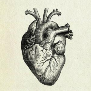a labeled diagram of the human heart | general center, Muscles