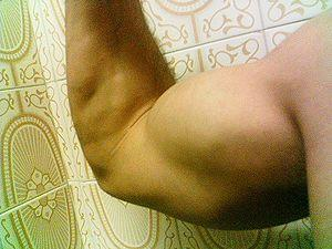 Bicep exercises without weights