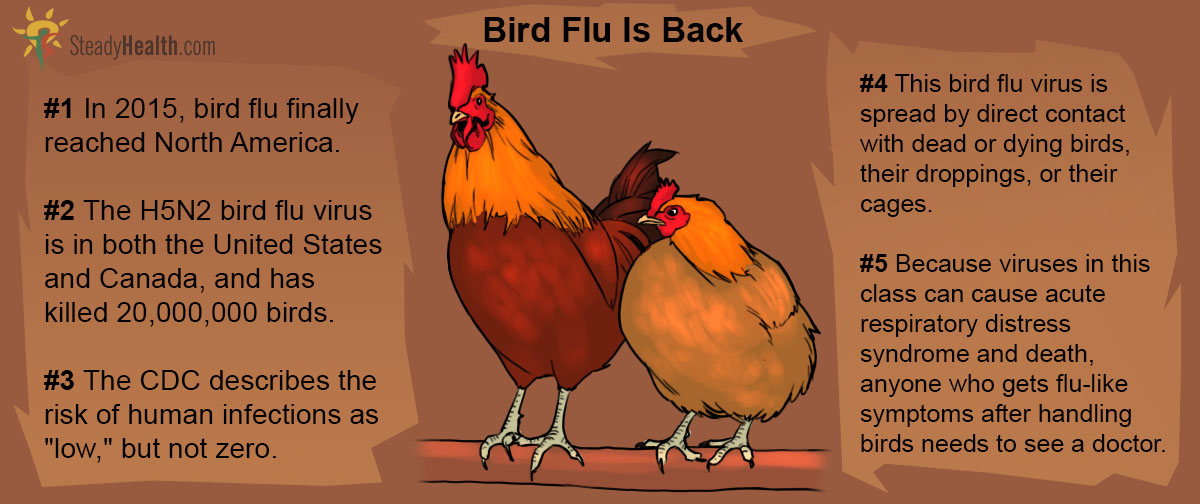 bird flu epidemic sweeps american midwest and nobody is. Black Bedroom Furniture Sets. Home Design Ideas