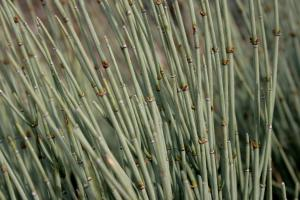 Ephedra extract facts