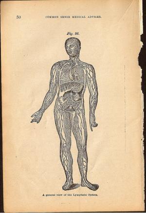 Healthy lymphatic system