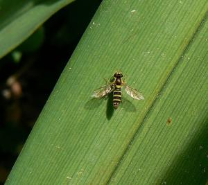Home treatment for wasp stings