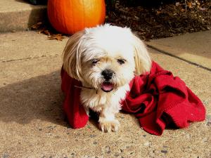 Homeopathic remedy for kennel cough