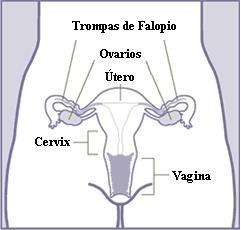 Information and functions of female reproductive system
