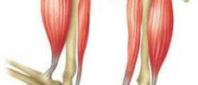 Muscles worked by pull ups