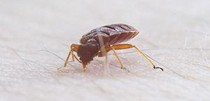 Prevention of bed bugs
