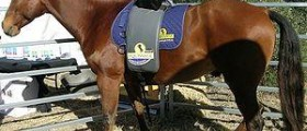 Prevention of equine influenza