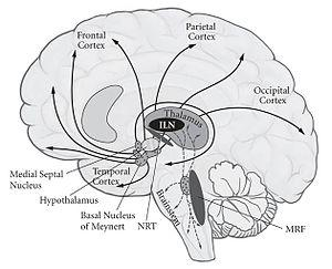Prevention of neural tube defects